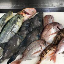 おまかせ日本海の魚介類直送便(水揚げ海域:玄達瀬沖合)