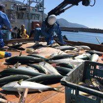 おまかせ日本海の魚介類直送便(越廼漁港:定置網水揚げ)